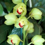 greenorchid7
